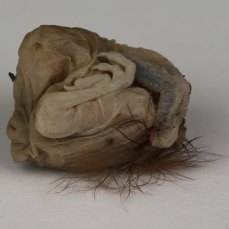 Marie Hannon_Sleeping_Photographic Image of a found Headless Chick_Aprox A1_2014