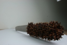 Marie Hannon_Thorned Knife_Knife and Thorns_13cmx3cm_2014